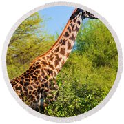 Giraffe Among Trees. Safari In Serengeti. Tanzania Round Beach Towel