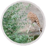 Giraffe Drinking Round Beach Towel