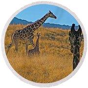 Giraffe Family In Living Desert Museum In Palm Desert-california Round Beach Towel