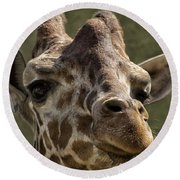 Giraffe Hey Are You Looking At Me Round Beach Towel