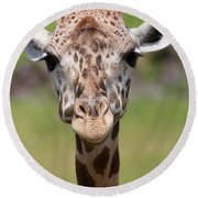 Giraffe Peek A Boo Poster Round Beach Towel