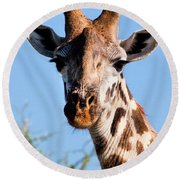 Giraffe Portrait Close-up. Safari In Serengeti. Round Beach Towel