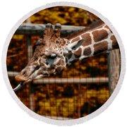 Giraffe Showing His 20 Inch Tongue Round Beach Towel