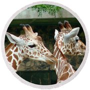 Giraffes-09023 Round Beach Towel