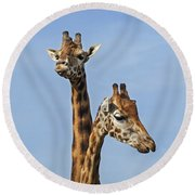 Giraffes 1 Round Beach Towel