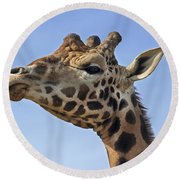 Giraffes 3 Round Beach Towel