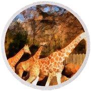 Giraffes At The Zoo Round Beach Towel