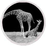 Giraffe's Round Beach Towel