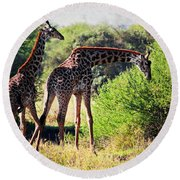 Giraffes On Savanna Eating. Safari In Serengeti Round Beach Towel