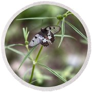 Glass-wing Butterfly Round Beach Towel