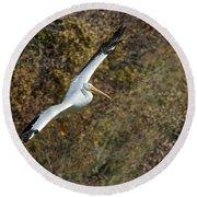 Gliding Pelican Round Beach Towel