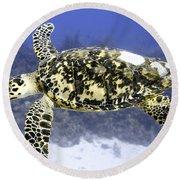 Gliding Sea Turtle Round Beach Towel