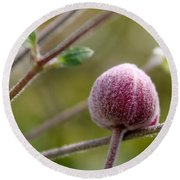 Globe Flower Bud Before The Bloom Round Beach Towel