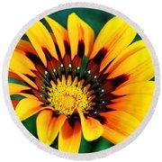 Glorious Day Yellow Flower By Diana Sainz Round Beach Towel
