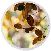 Glorious Foliage. Tree In Pamplemousse Garden 1. Mauritus Round Beach Towel