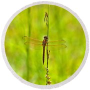 Glorious Golden-winged Round Beach Towel