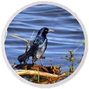 Glorious Grackle Round Beach Towel
