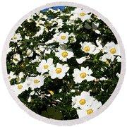 Glorious White Roses Db Round Beach Towel