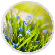 Scilla Siberica Flowerets Named Wood Squill  Round Beach Towel