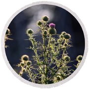 Glowing Thistle - 3 Round Beach Towel