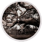 Gnarly Limbs At The Ashley River In Charleston Round Beach Towel