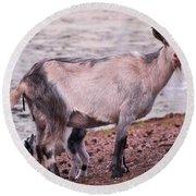 Goat Round Beach Towel