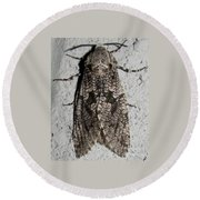 Goat Moth Round Beach Towel