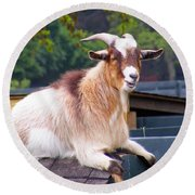 Goat On The Roof Round Beach Towel