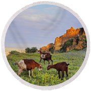 Goats In Fes Round Beach Towel
