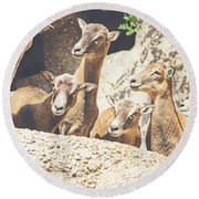 Goats On A Rock Round Beach Towel