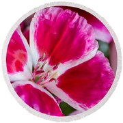 Godetia Pink And White Flower Round Beach Towel