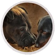 Going Nose To Nose Round Beach Towel