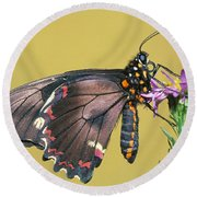 Gold Rim Swallowtail Butterfly Round Beach Towel