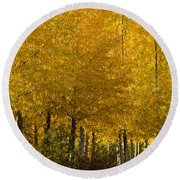 Golden Aspens Round Beach Towel by Don Schwartz