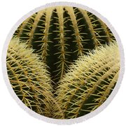 golden barrel cactus Mexico Round Beach Towel