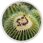 Golden Barrel Cactus Round Beach Towel