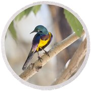 Golden-breasted Starling Round Beach Towel