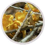 Golden Chanterelle - Cantharellus Cibarius Round Beach Towel