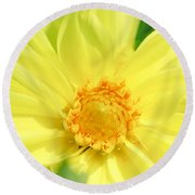 Golden Daisy Round Beach Towel