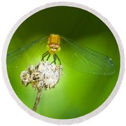 Golden Dragonfly On Perch Round Beach Towel
