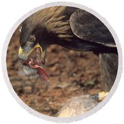 Golden Eagle Eats Round Beach Towel