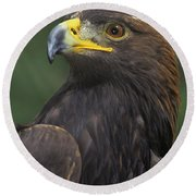 Golden Eagle Portrait Threatened Species Wildlife Rescue Round Beach Towel