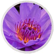 Golden Glow Of The Lavender Lotus Round Beach Towel