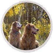 Golden Goldens - Golden Retriever Brothers - Casper Mountain - Casper Wyoming Round Beach Towel