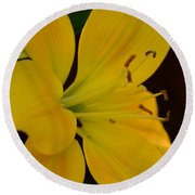 Golden Lily Glow Round Beach Towel