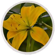 Golden Lily Sway 2013 Round Beach Towel