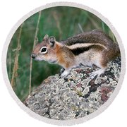 Golden Mantled Ground Squirrel Round Beach Towel