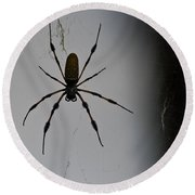 Golden Orb-weaver Round Beach Towel