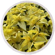 Golden Poinsettias Round Beach Towel