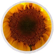 Golden Ratio Sunflower Round Beach Towel by Kerri Mortenson